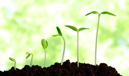 semilla: Crecer, crecer, planta. Foto de archivo