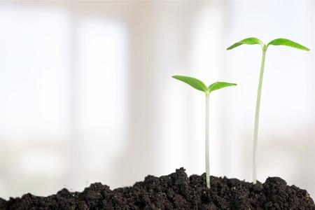 crecimiento: Crecimiento, Pl�ntula, Planta. Foto de archivo