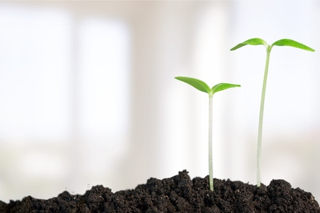 bean plant: Growth, Seedling, Plant. Stock Photo