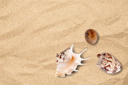 clima tropical: Shell, arena, estrellas de mar.