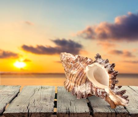 sea slug: Sand, sea, isolated.