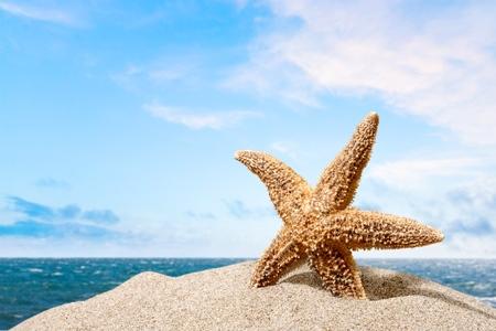 winter escape: Beach, starfish, caribbean.