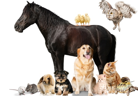 themes: Animal, animal themes, arabian horse. Stock Photo