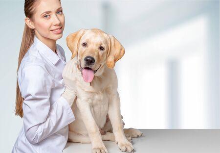 veterinary medicine: Vet, Veterinary Medicine, Dog.