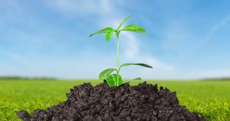 pflanze wachstum: Pflanze, Wachstum, Dirt. Lizenzfreie Bilder