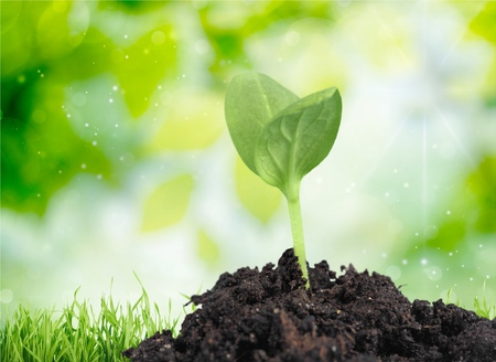 crecimiento planta: Pl�ntula, Planta, Crecimiento.