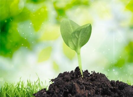 pflanze wachstum: Setzling, Pflanze, Wachstum.