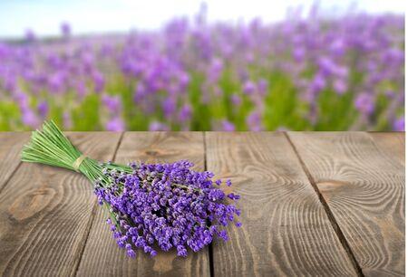 fiori di lavanda: Lavanda, Bouquet, Colore lavanda.