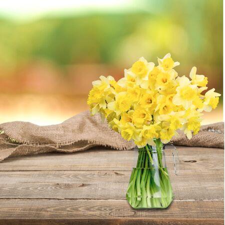 daffodil: Spring, Daffodil, Flower.