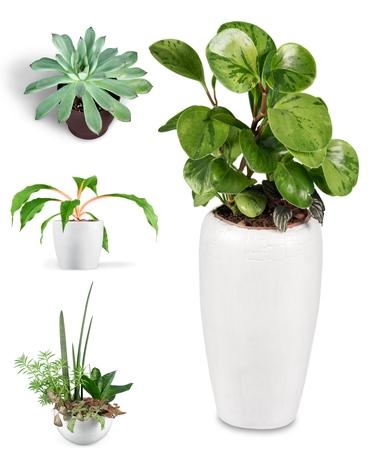 flower pot: Flower, orchid, pot. Stock Photo