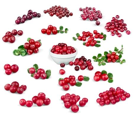 cranberry fruit: Cranberry, Fruit, Berry Fruit. Stock Photo