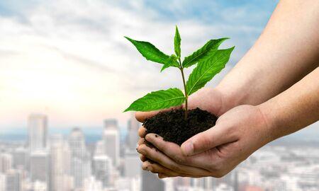crecimiento planta: Mano humana, Flora, Crecimiento. Foto de archivo