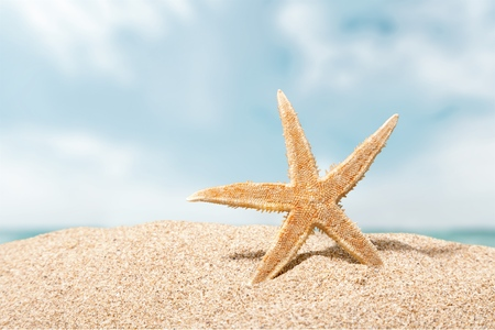 etoile de mer: Beach, �toiles de mer, des cara�bes. Banque d'images