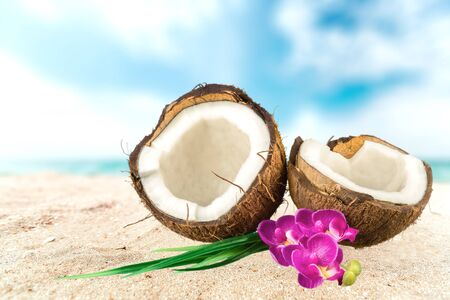 clima tropical: Coco, Tropical, Flor. Foto de archivo