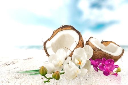 noix de coco: Noix de coco, Tropical, Fleur.
