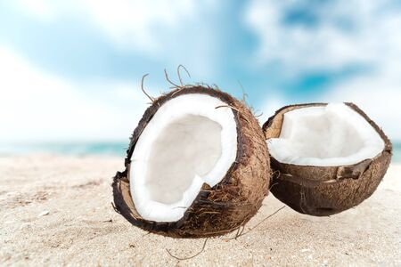 tropical climate: Coconut, Tropical Climate, Fruit. Stock Photo