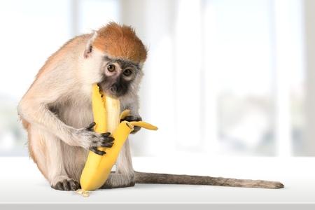 원숭이, 바나나, 영장류. 스톡 콘텐츠