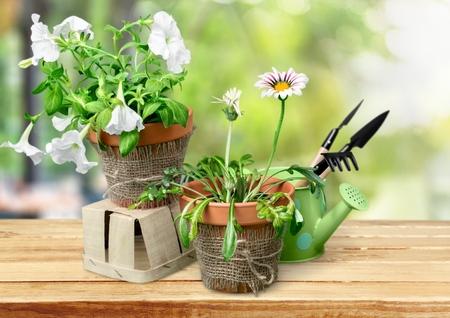 flower box: Gardening, garden, spring.