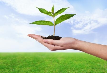 plant hand: Human Hand, Plant, Growth.