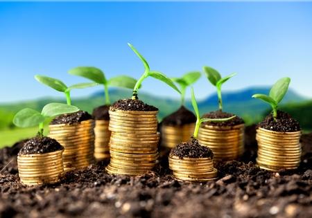 economy concept: Growth.
