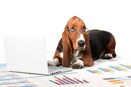 usando computadora: Perro.