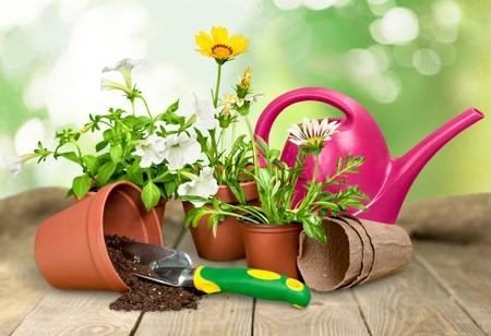 plant in pot: Gardening Equipment. Stock Photo