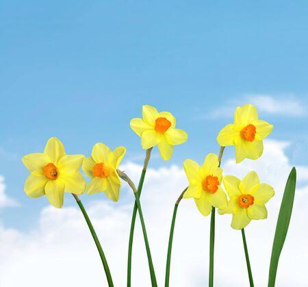 dia soleado: Narciso.