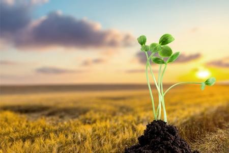 irish culture: Green plant Stock Photo