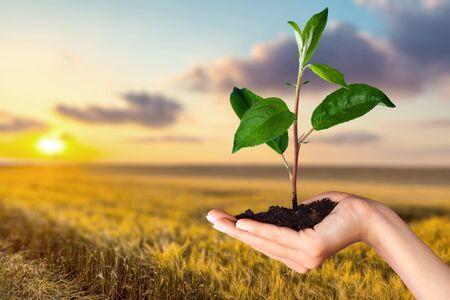 crecimiento planta: El crecimiento de la planta Foto de archivo