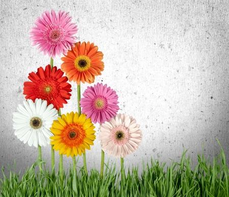 sepals: Daisy flowers