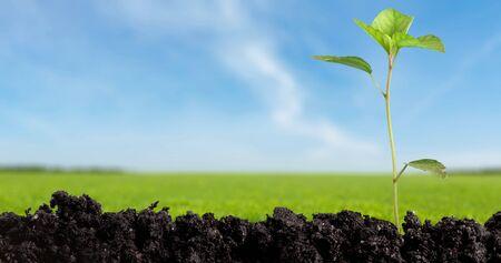 soil conservation: Seedling. Stock Photo