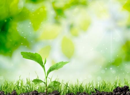 oak: Seedling. Stock Photo