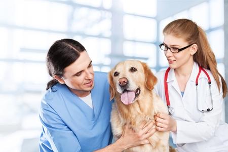 rabies: Veterinarian.