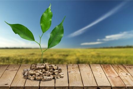 La biomasa.