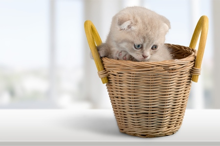 pampered pets: Kitten.