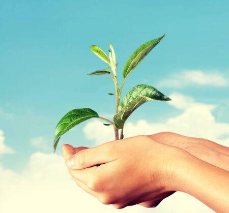 crecimiento planta: Crecimiento de la planta. Foto de archivo