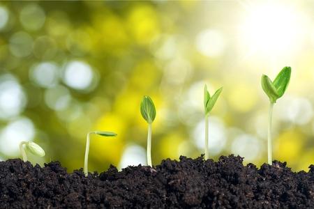 種子の生長。