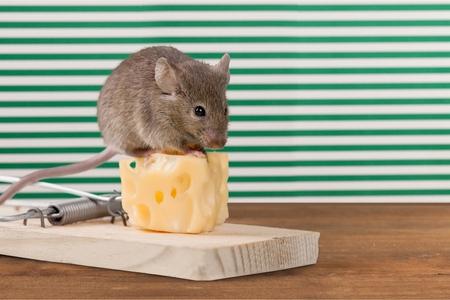 mousetrap: Mousetrap Risk.