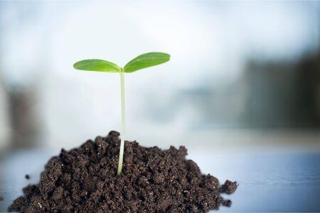 crecimiento planta: Planta de crecimiento. Foto de archivo