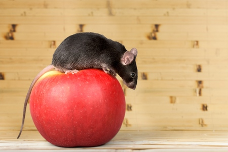 incentives: Mouse on Apple. Stock Photo