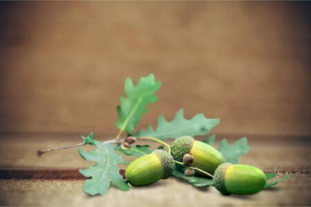 acorns: Oak Acorns.