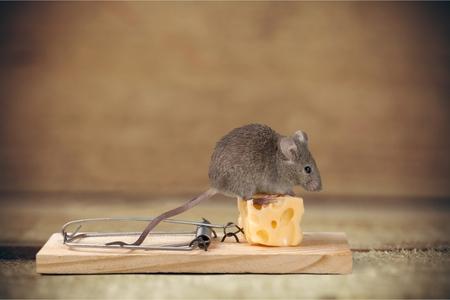 マウス トラップ。 写真素材