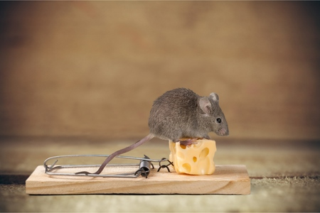 raton: trampa de ratón.