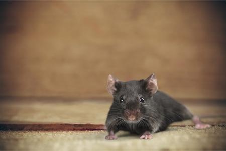 Mouse Risk. Foto de archivo