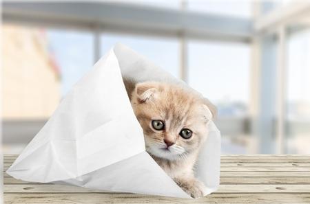 cute kittens: Domestic Cat.