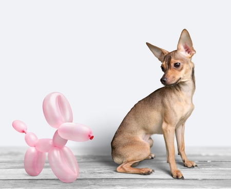 sculpture: Balloon dog and real dog. Stock Photo