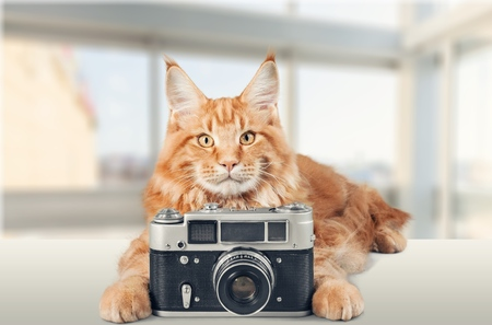 pet photography: Cat with camera. Stock Photo