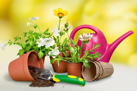 shovel in dirt: Gardening Equipment. Stock Photo