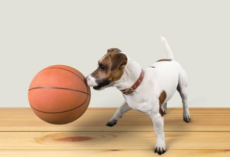 ball isolated: Dog playing.