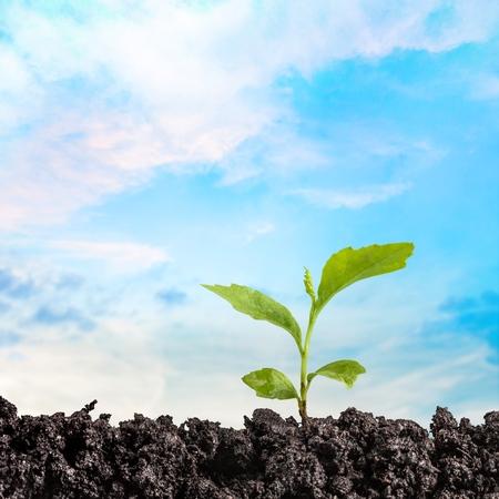 pflanze wachstum: Pflanzenwachstum.